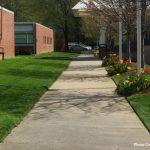 sidewalk and flowers