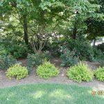 shrubs and green grass