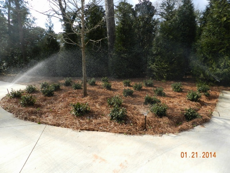 shrubs and pinestraw