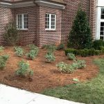 shrubs and pinestraw in front of house