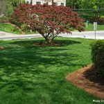 green grass with trees and shrubs