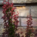 shrubs against brick wall