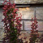 shrubs against brick wall