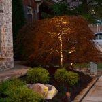 shrubs being lit