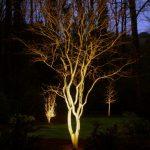 tree being lit at night