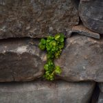 greenery in stone wall