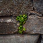 greenery in stone wall